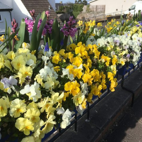 Newport and Wormit in Bloom