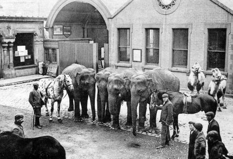 Elephants at the Pier